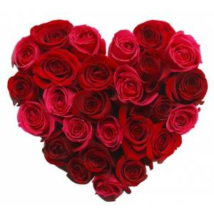 Сердце 21 красная роза R386