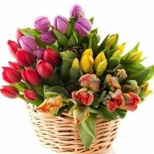Букет из 51 ярких тюльпанов в корзине R163
